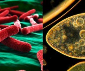 ¿Cuál es la Diferencia entre Células Procariotas y Eucariotas?