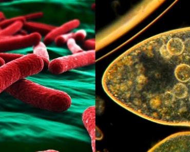 ¿Procariotas y eucariotas son?