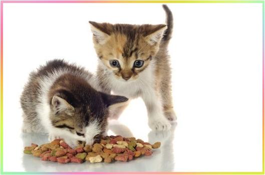 Gato Comiendo Imagen